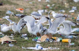 gulls amid picnic waste